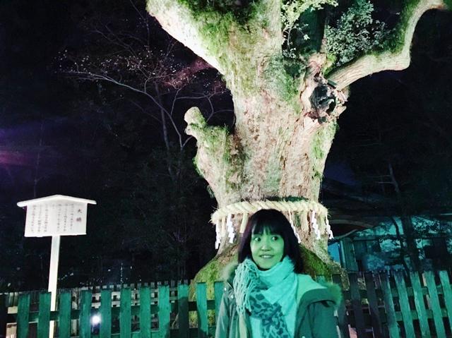 熱田神宮 ご神木