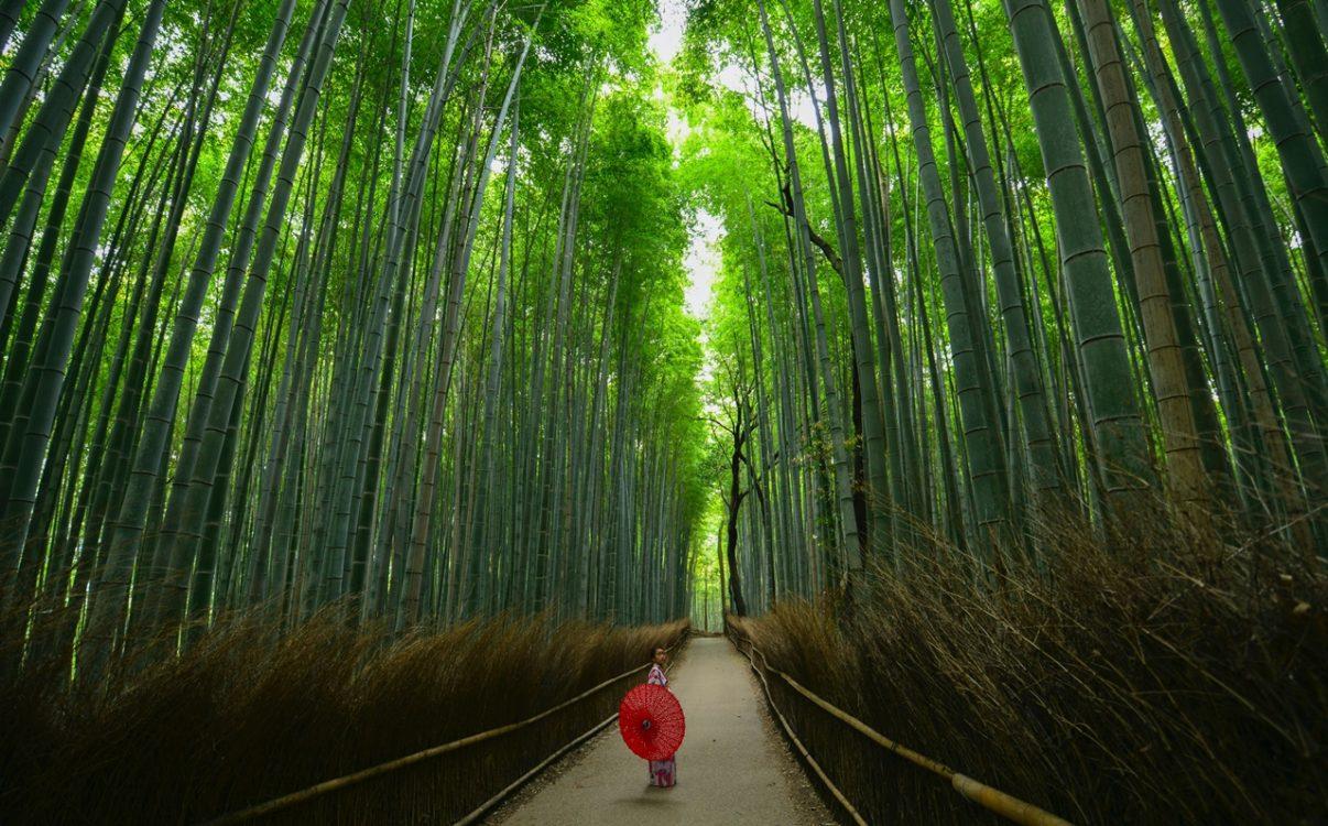 竹林にいる女性