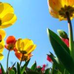 花と根っこ