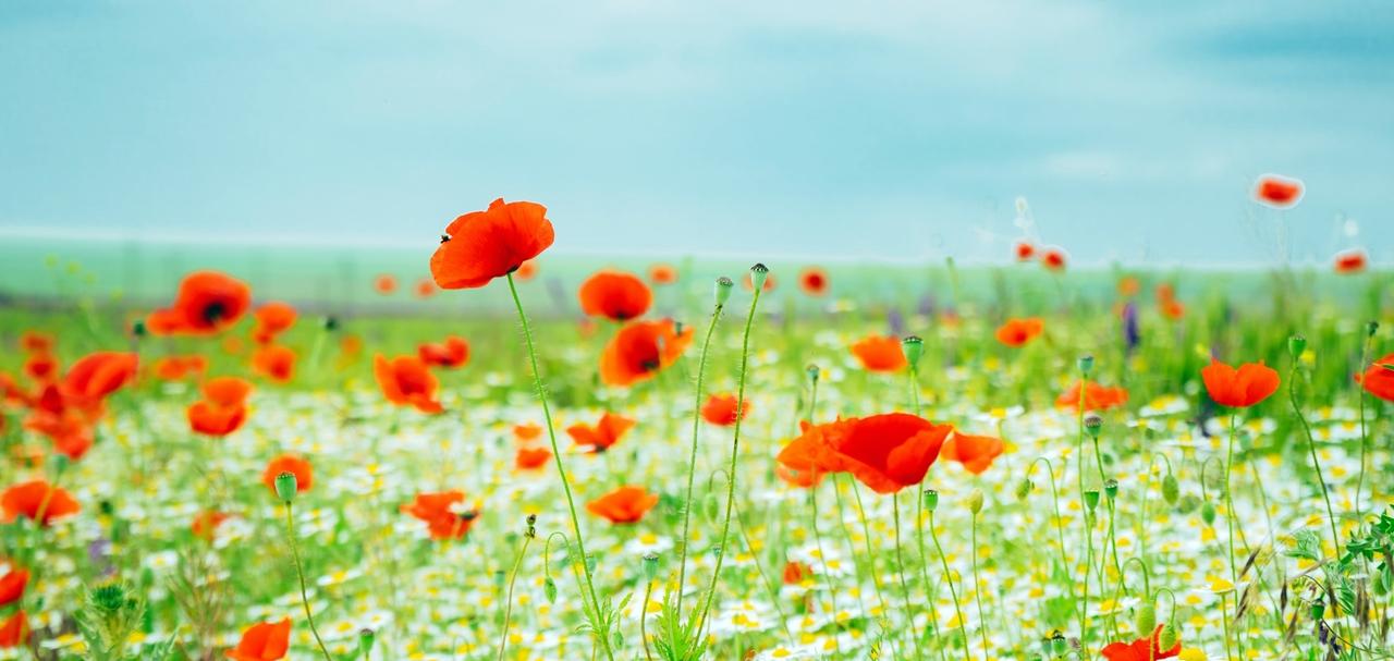 沢山の小さな花