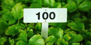 植物と100